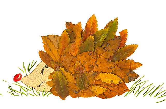 Collagen aus Herbstlaub